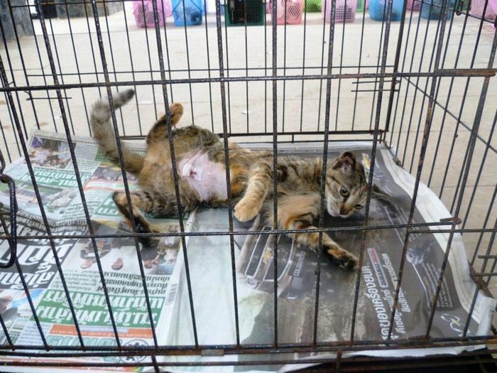 Джуни Ковакс успешно осуществила программу по стерилизации бездомных животных.