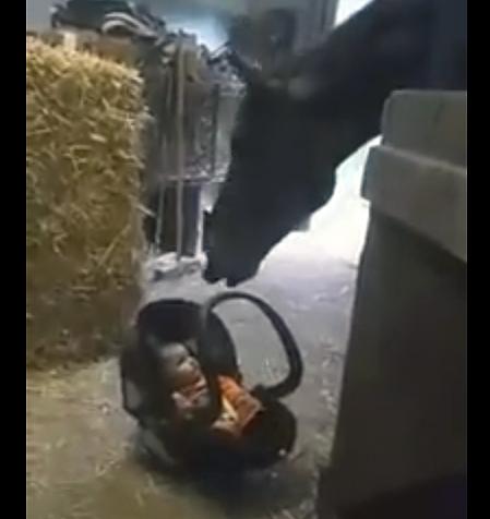 Ребёнок начал плакать. То, что сделала лошадь, просто удивительно!