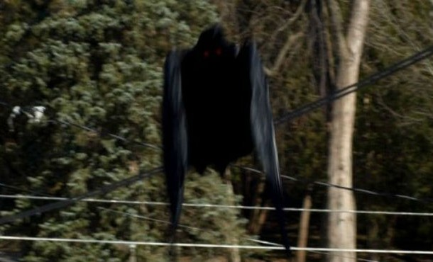news-mothman-610x370
