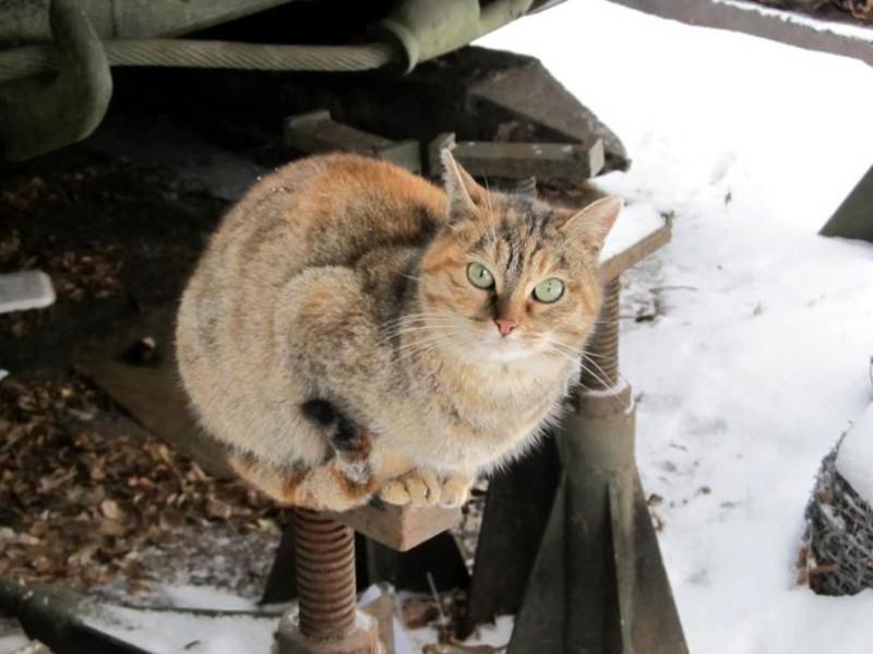 Модели холодно. И жрать давай! бронетехника, животные, коты