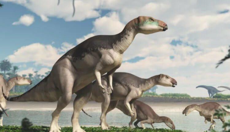 В Австралии найден новый динозавр с драгоценными камнями