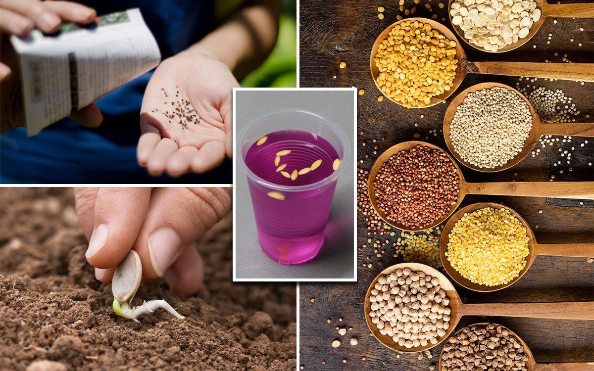 Картинки по запросу Способы подготовки семян перед посевом