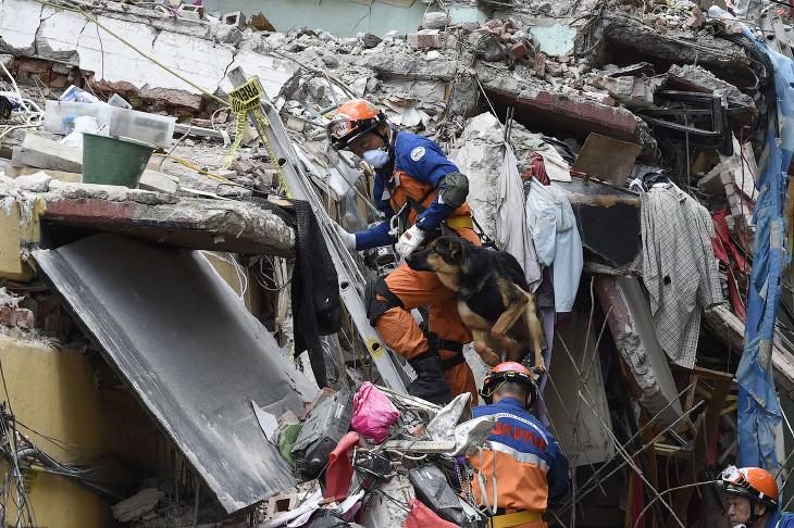 У смерти на краю… Среди разрушенных мексиканских кварталов эти псы ищут и достают людей