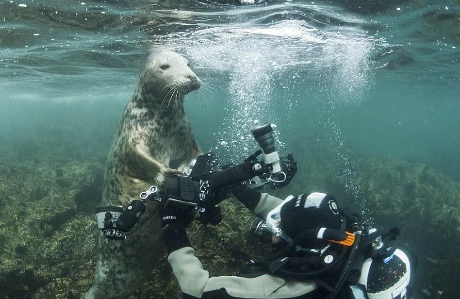 Тюлень пытался украсть у дайвера камеру, а в итоге получились эти потрясные фото