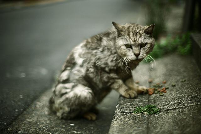 лечения аудио запись уродливый кот запчасти неисправный
