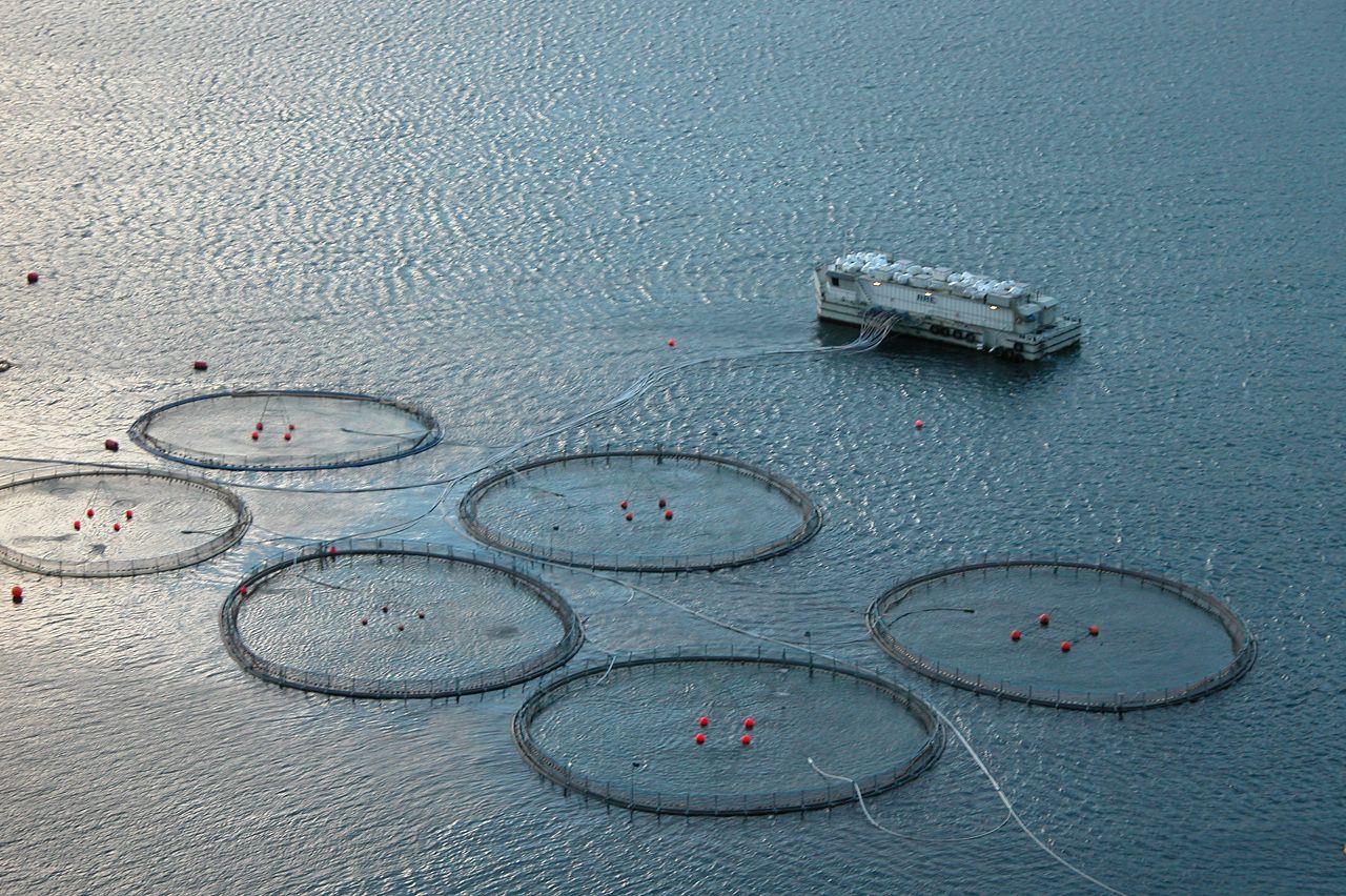 Фото достопримечательностей Стран Скандинавии: Акваферма вблизи Ферерских островов