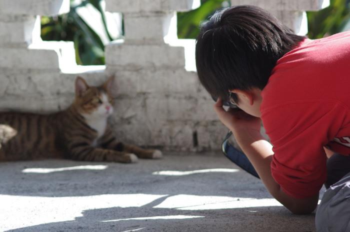 Места на Земле, где кошки чувствуют себя как в раю