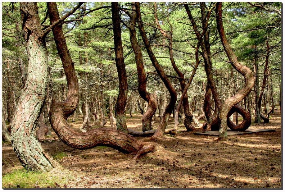 Самые уникальные леса в России