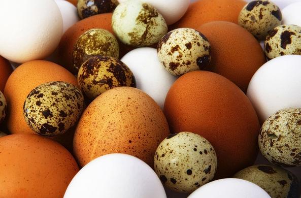 Ученые объяснили, почему у птичьих яиц такая форма