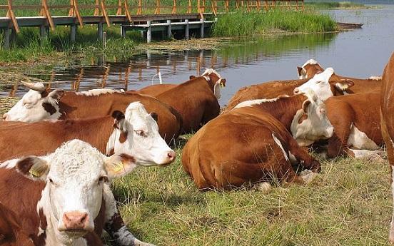 Латвийский фермер: Годманис ввел систему поборов вкарман чиновника