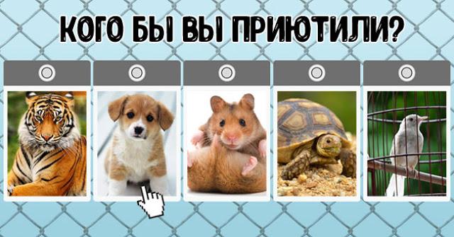 Тест: какое животное вы бы приютили?