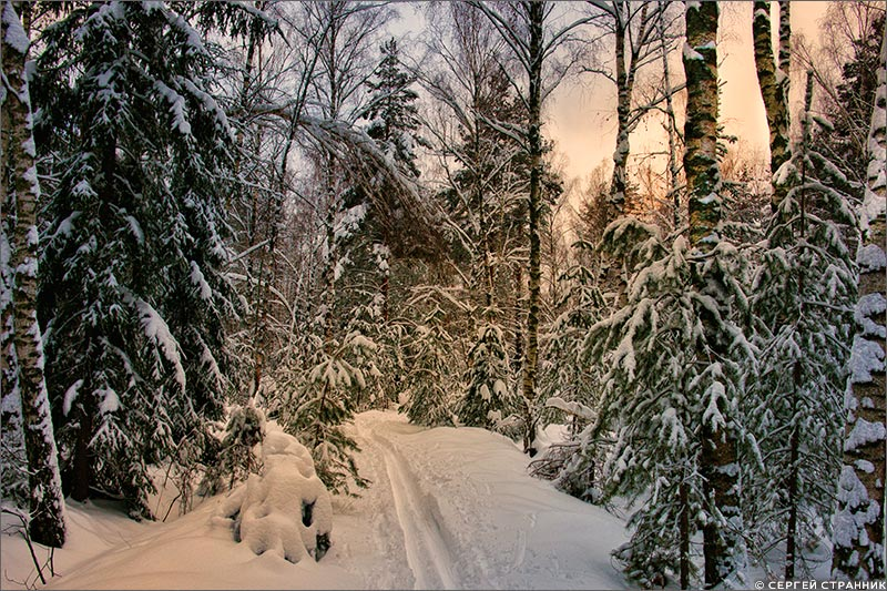 Фото Гжель Закат зимнего дня в лесу