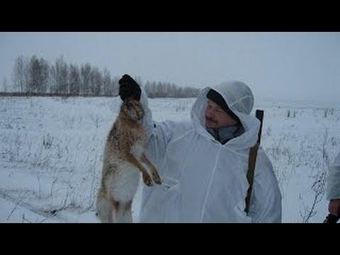 очень интересная охота на зайца very interesting hare hunting!!!