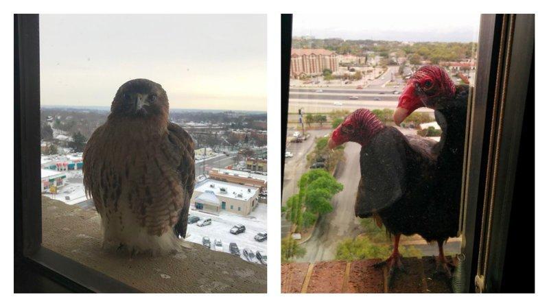 Вот так выглядит дружба птиц и людей!
