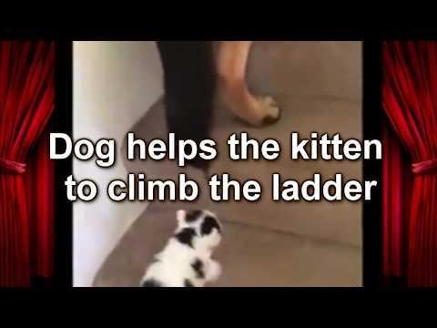 Собака помогает котенку подняться по лестнице