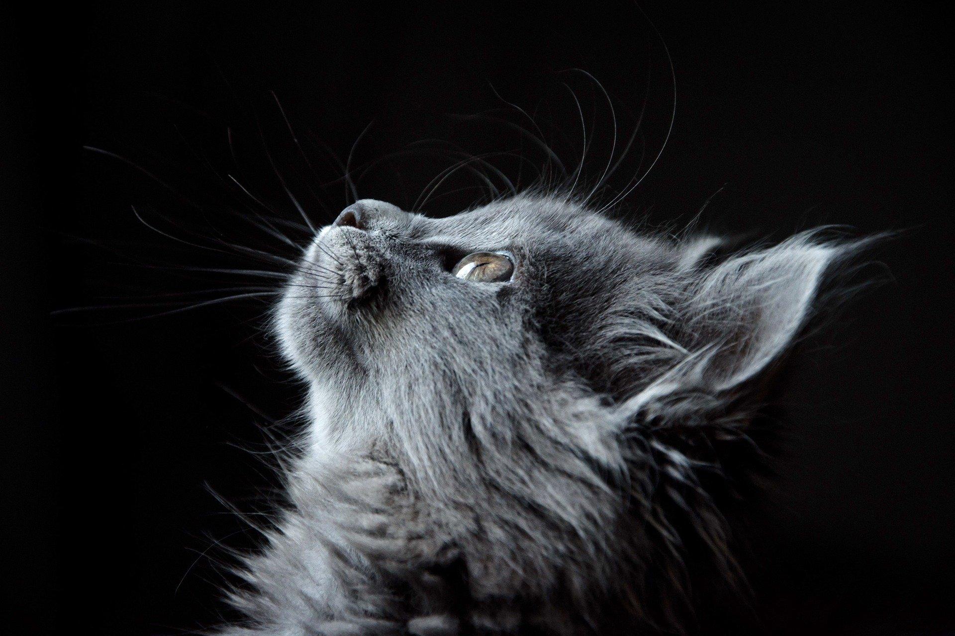 Учимся у кошки
