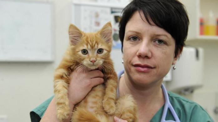 Котенок едва не умер от вега…