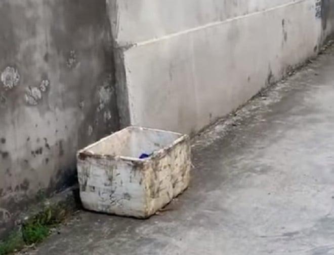 Два щенка сидели в коробке для мусора. Их выбросили из-за «некрасивых» мордочек