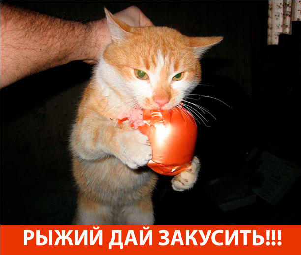 Рыжий - дай закусить