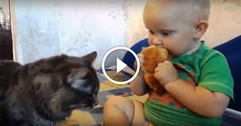 Когда на двоих всего одна булка — самое очаровательное видео о том, как нужно делиться