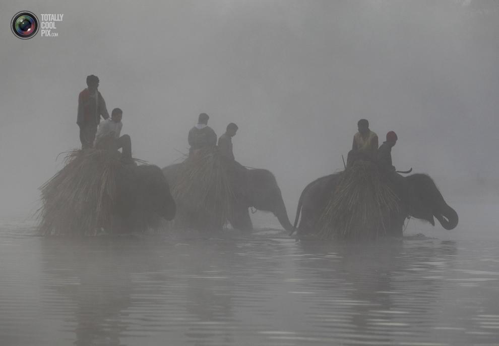 elephants 006 Слоны в национальном парке Читван