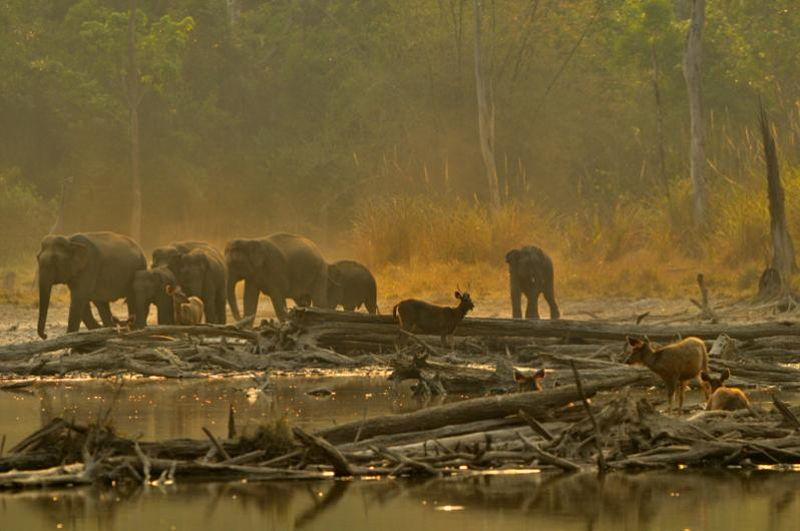 elephant2 Тайский заповедник дикой природы Phu Khieo