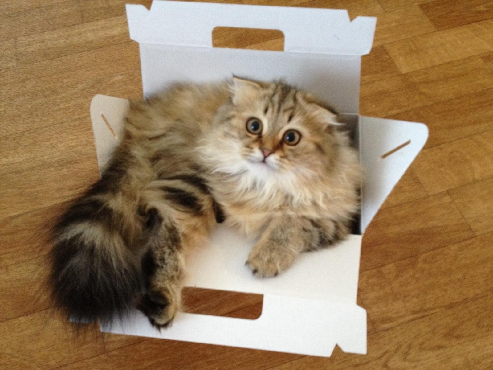 Коробки для кондитерских изделий и тортов
