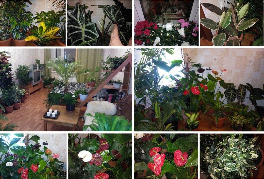 Как удобрять растения в домашних условиях