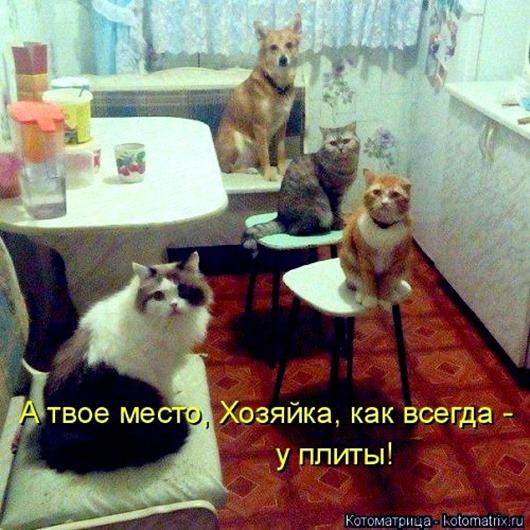 1483107309_kotomatricy-16