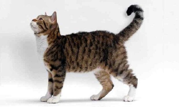 Что кошка пытается сказать вам с помощью хвоста