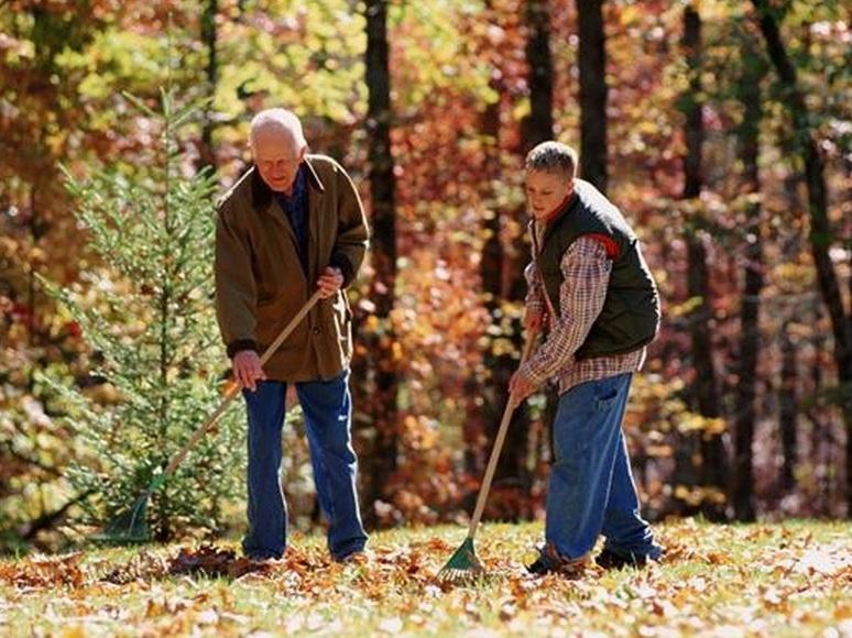 Опавшая листва: убирать или не убирать, вот в чем вопрос!