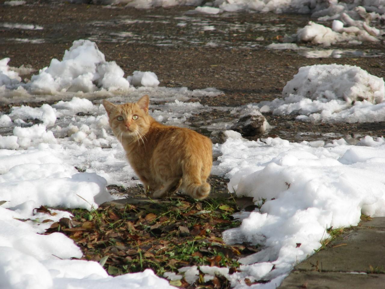 Братья наши меньшие: жила-была догадливая кошка
