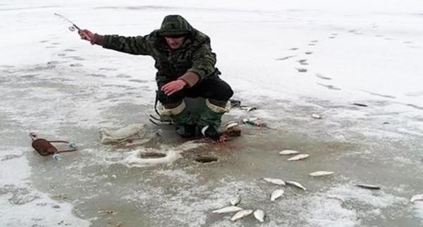 какая рыба клюет зимой на червя