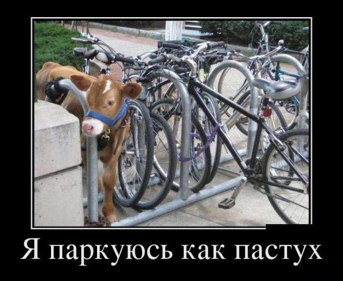 Я паркуюсь как пастух демотиватор, демотиваторы, жизненно, картинки, подборка, прикол, смех, юмор