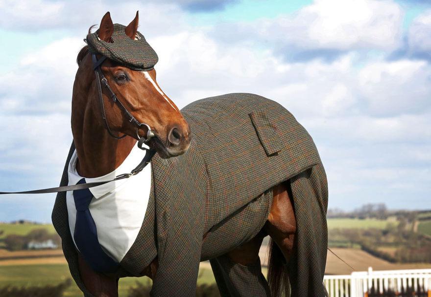 Для лошади сшили на заказ костюм-тройку! Конь в пальто нервно курит в сторонке!
