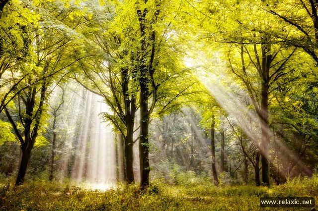 Sun_rays_011