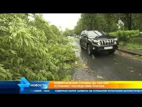 Москву после жуткого урагана приводят в порядок 35 тысяч коммунальщиков
