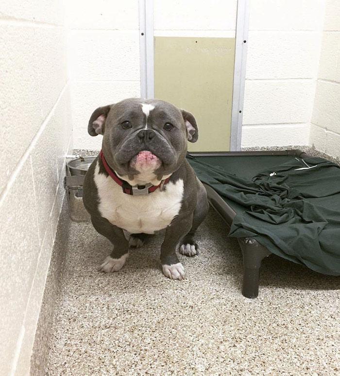 Благодаря интернету этот печальный приютский пес нашел дом и счастлив