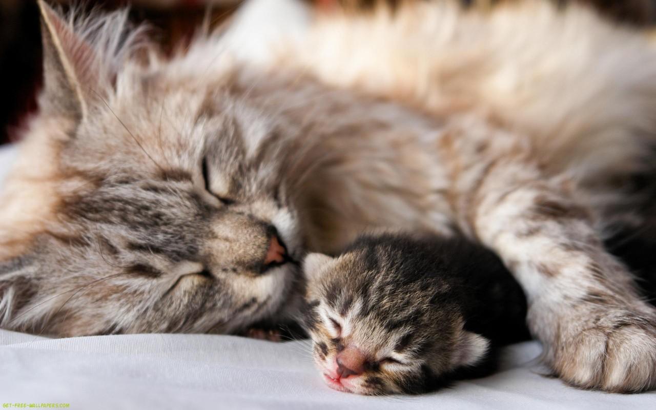 Кошачья этика