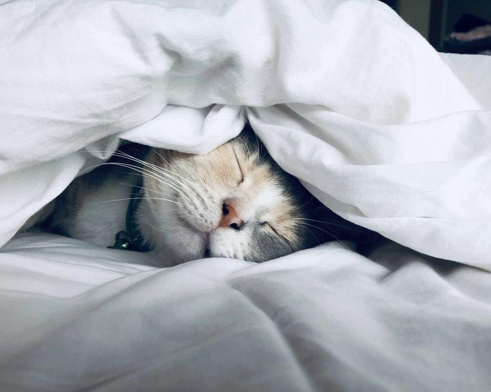 Низкая температура в комнате поможет быстрее уснуть и сжечь больше жира