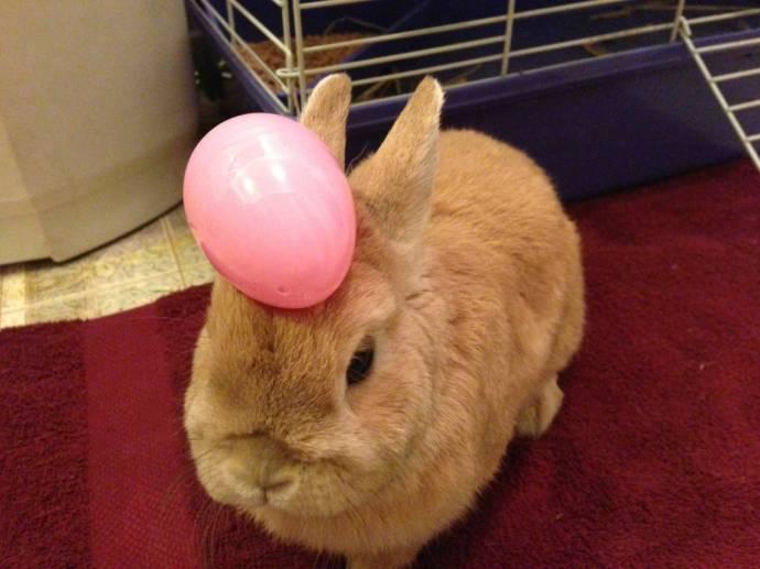 Кролик Винни - самое терпеливое животное в мире