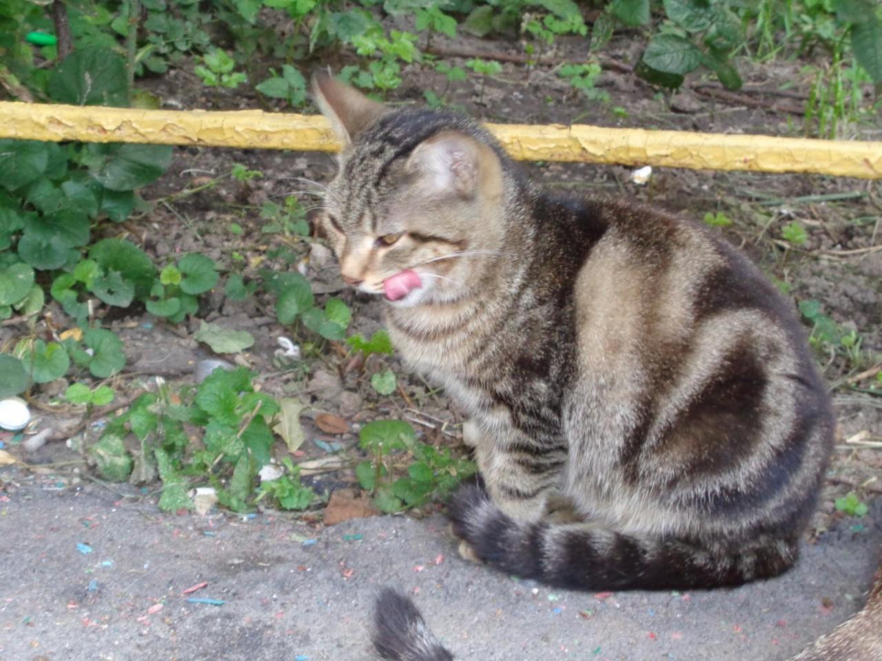 Ищет дом красивая молодая кошечка
