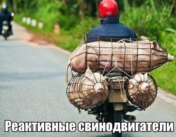 Реактивные свинодвигатели :-D