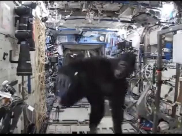 Российский космонавт сообщил о захвате МКС обезьянами