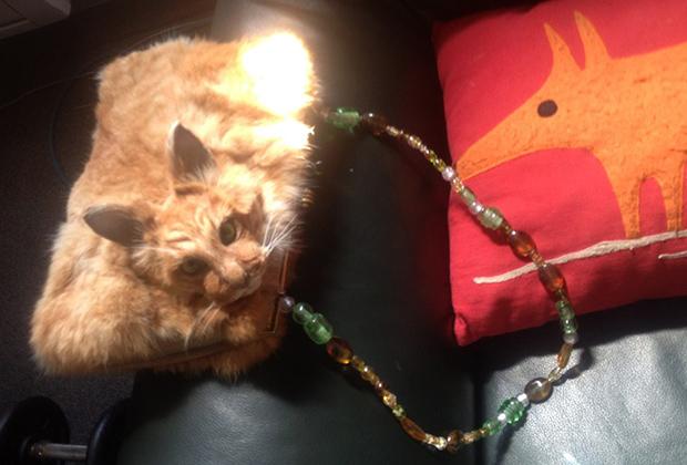 """""""Кто сказал мяу.."""": Таксидермист из Новой Зеландии сшила клатч из кошки"""