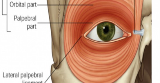 Почему веко одного глаза дергается? Сигналы тела, это то, что оно хочет сказать вам