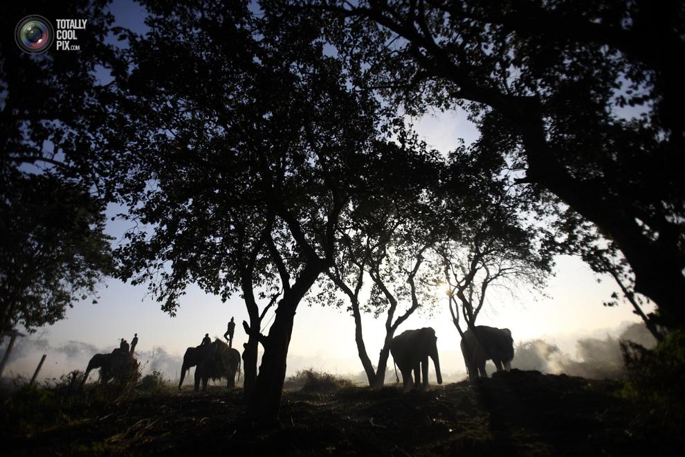 elephants 019 Слоны в национальном парке Читван