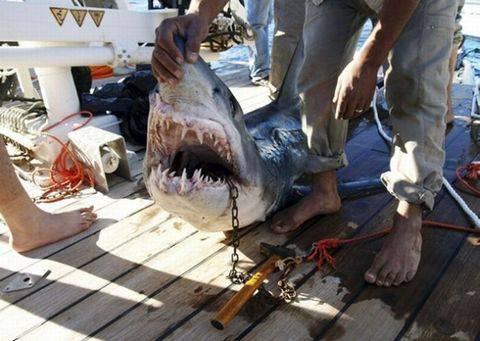 Акулы-людоеды в Египте и израильские спецслужбы