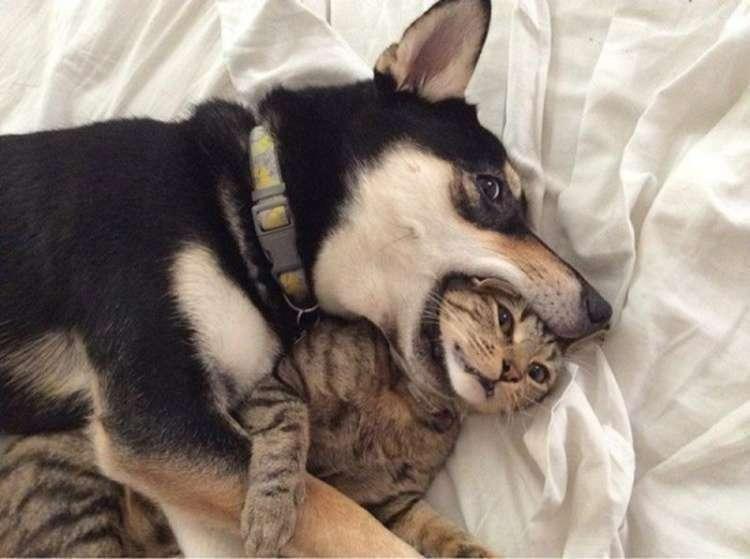 Кошки и собаки могут быть лучшими друзьями