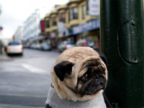 Собаки, у которых выдался тяжёлый день